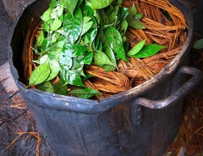 Healing Addictions With Ayahuasca