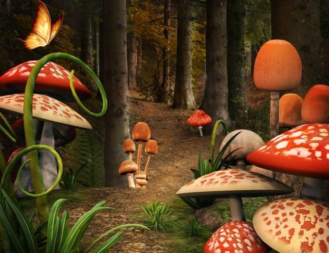How Psilocybin 'Magic' Mushrooms Reconnect Us With Nature