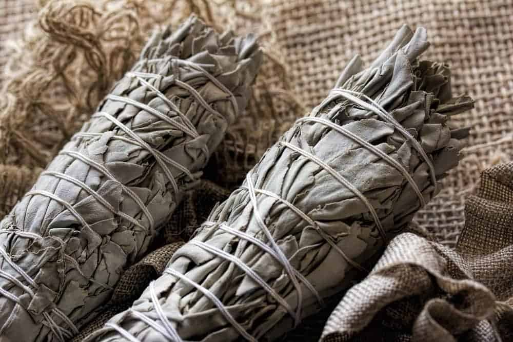 Studies have validated the traditional use of sage. Via: lkurugan | Shutterstock.