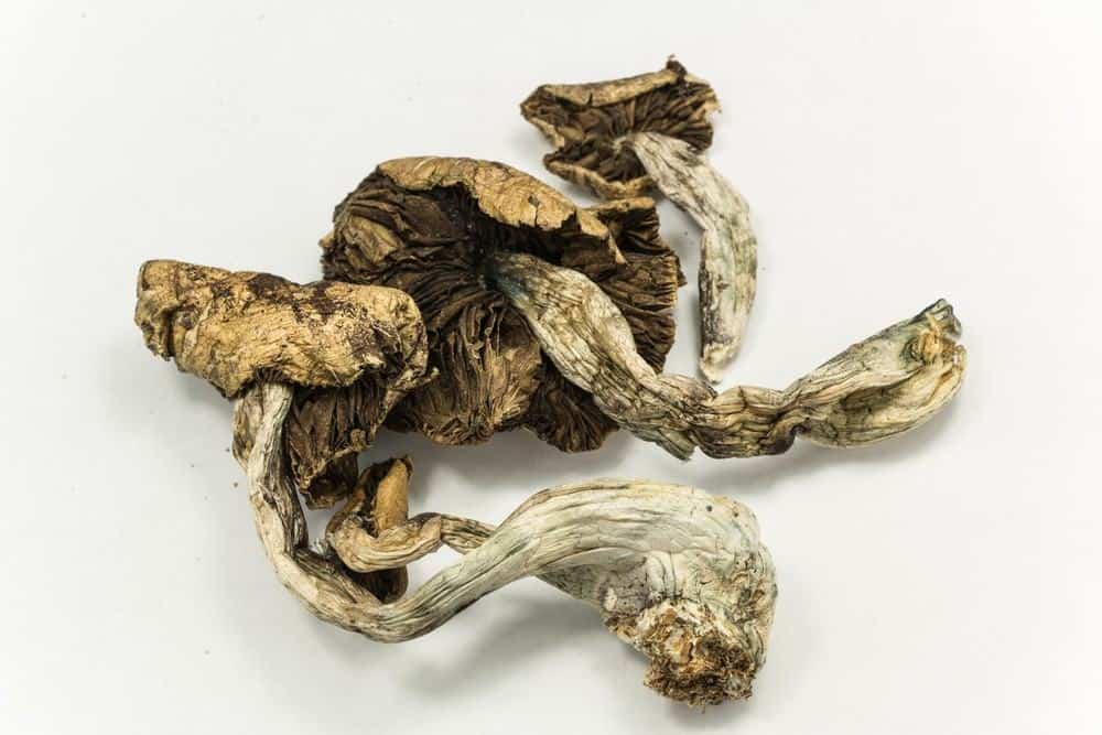 Dried Psilocybin Mushrooms Via: Atomazul