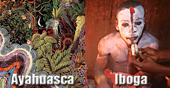 Ayahuasca Vs. Iboga