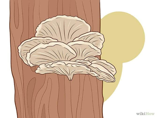 670px-Grow-Edible-Mushrooms-Step-14