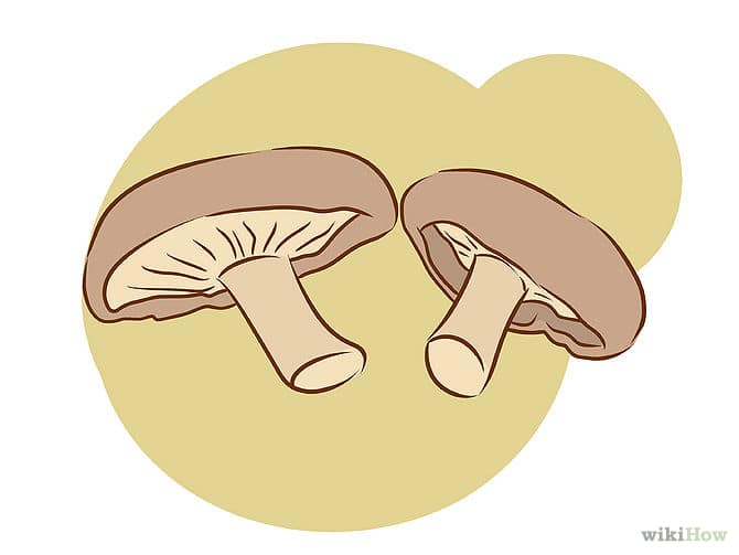 670px-Grow-Edible-Mushrooms-Step-4