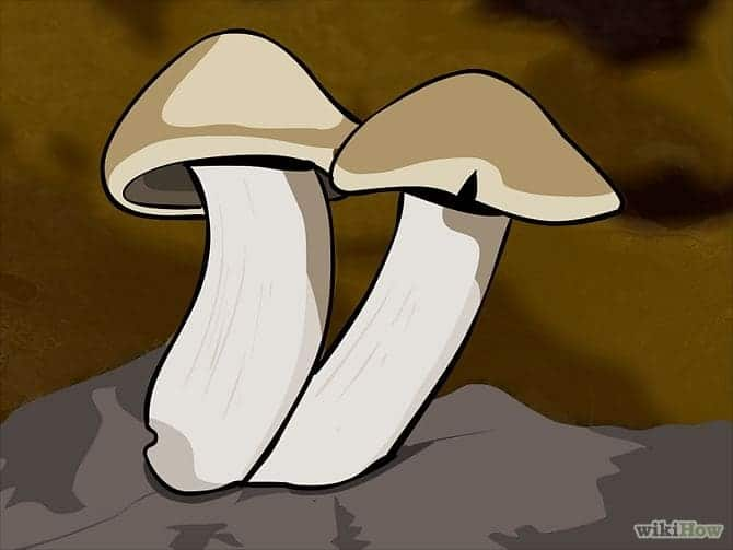 670px-Grow-Mushrooms-Step-1