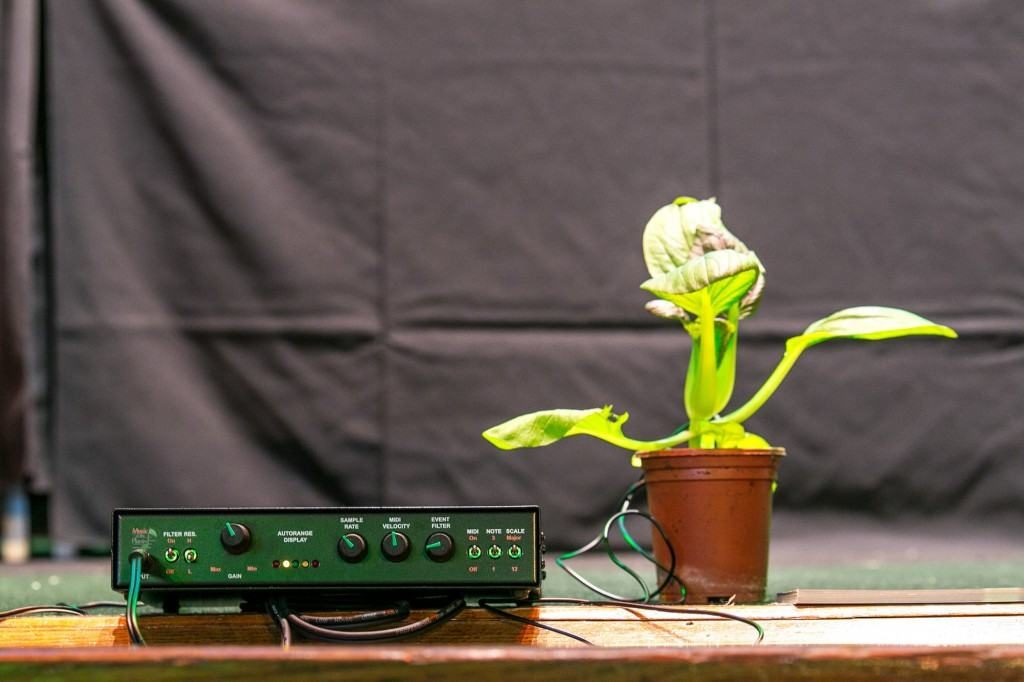 A bio feed-back machine measures signals in the plant, which are run through a synthesia – the plants making music? Picture taken by Boris Austen