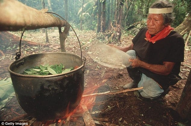 Ayahuasca: A shaman in the Coafan region boils leaves for their psychoactive properties as used in ayahuasca, Ecuador, 2009