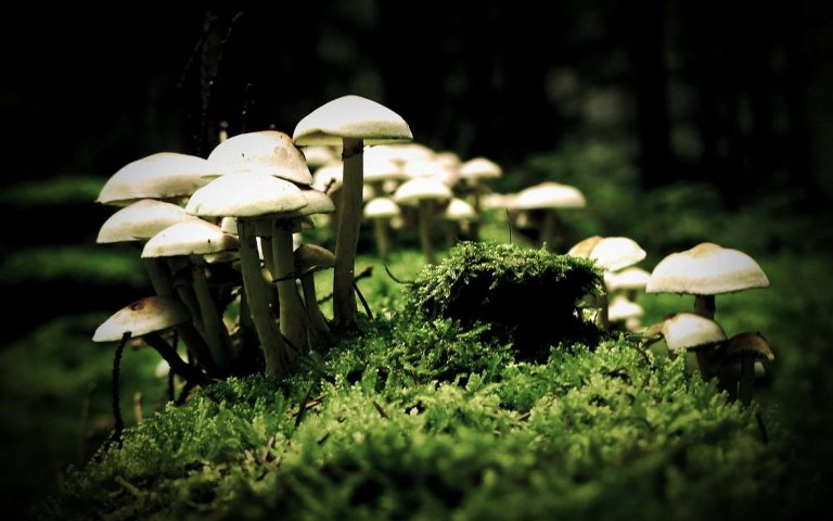 Magic Mushrooms Expand Your Mind And Amplify Your Brain's Dreaming Areas