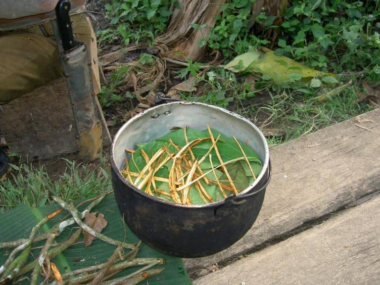 Ayahuasca preparation in Pastaza, Ecuador. Terpsichore/Wikimedia commons