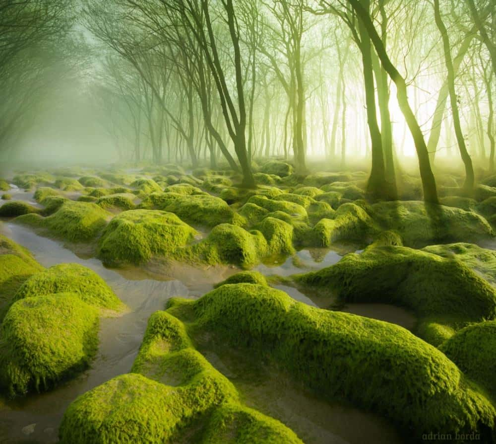 © Adrian Borda A marsh covered with moss.