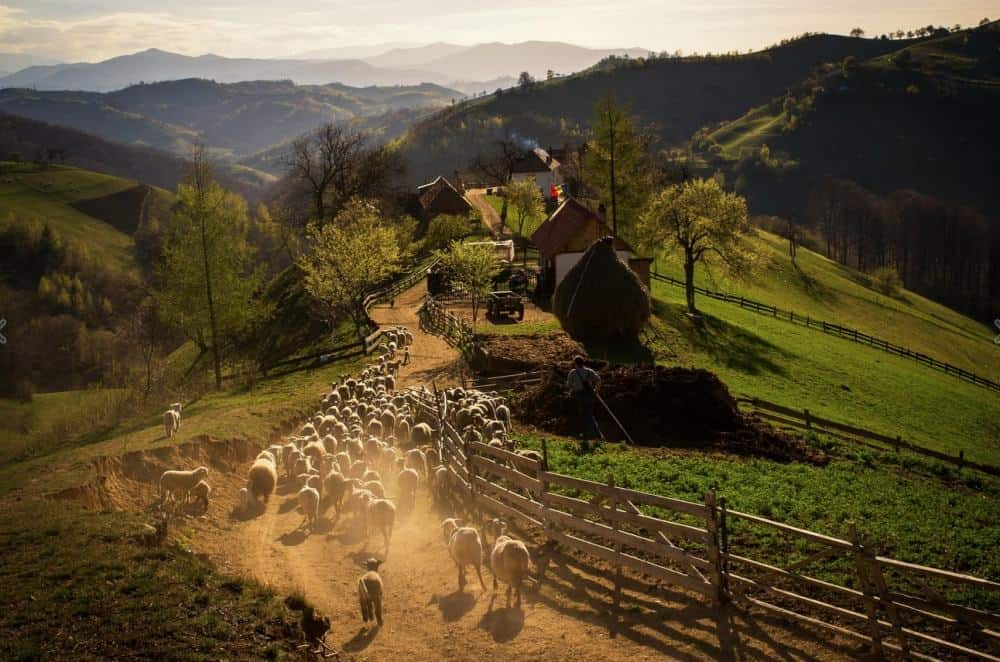 © Catalin Caciuc A spring evening in a Romanian village.