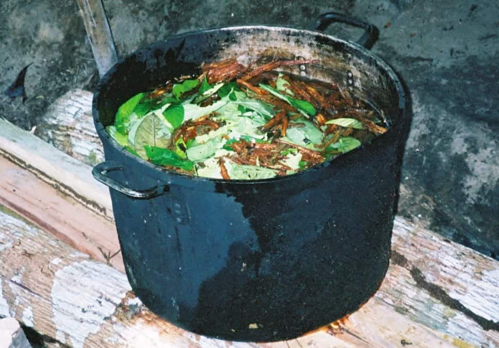 5 Spiritual Benefits of Using Ayahuasca – Sociedelic