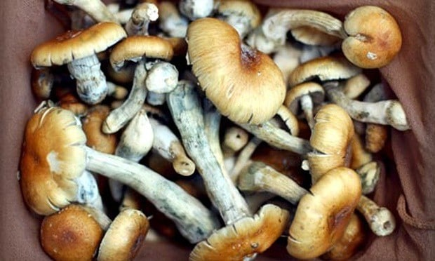 Psychedelic drugs can unlock mysteries of brain