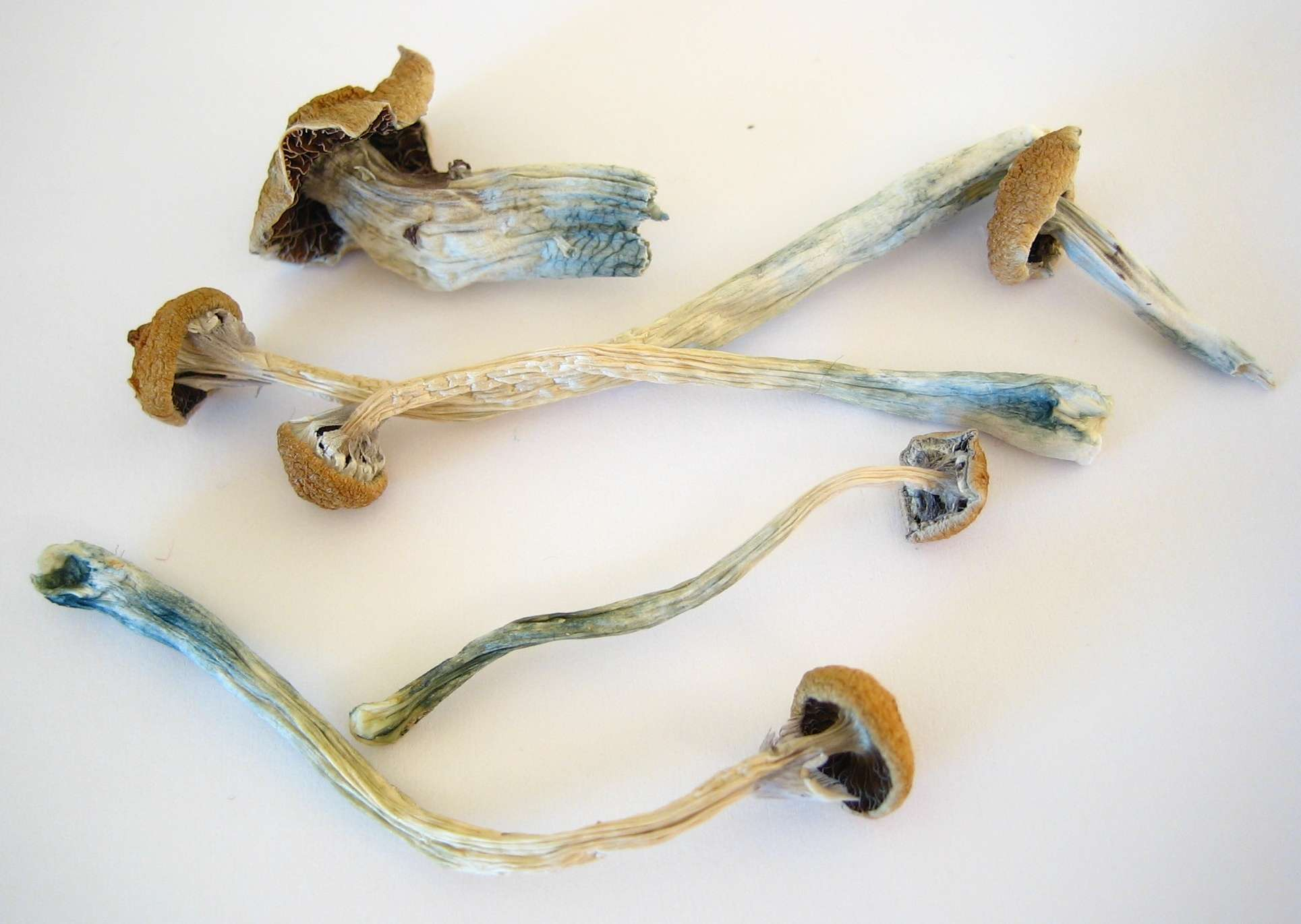 psilocybin mushrooms online