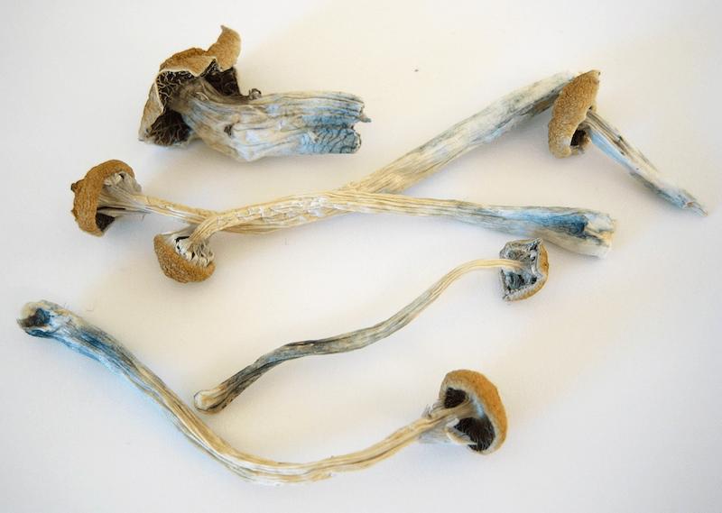 a-handful-of-magic-mushrooms
