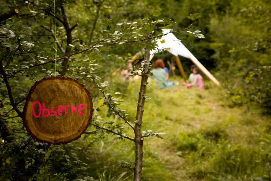 transylvaliens-2015-healing-nature