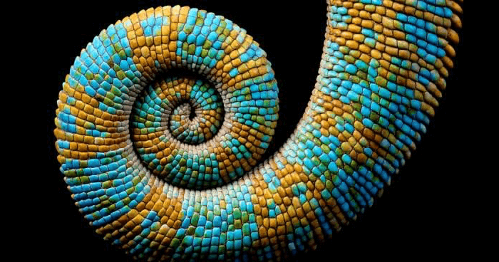 Spiral geometry in nature