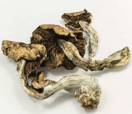 psilcybin-dried