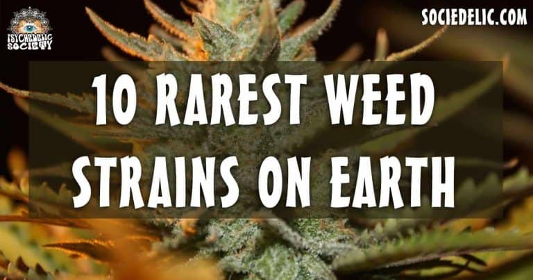 What is the rarest weed out there? Top 10 Rarest Weed Strains On Earth