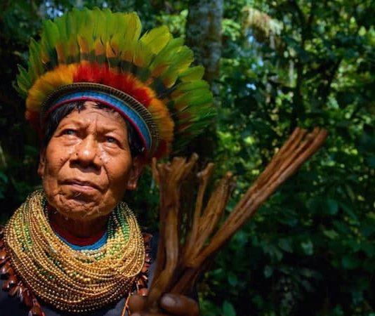 ayahuasca experience