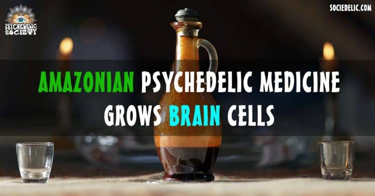 Ayahuasca stimulates the birth of new brain cells
