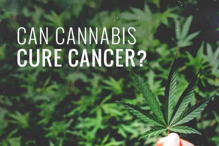 BBC Asks: Can Cannabis Cure Cancer?