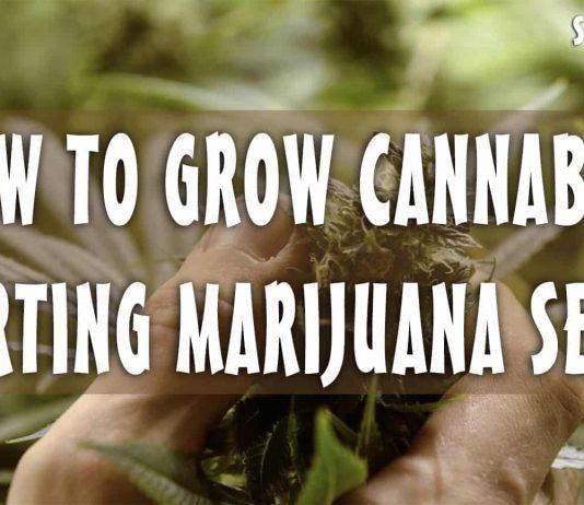 How to grow cannabis