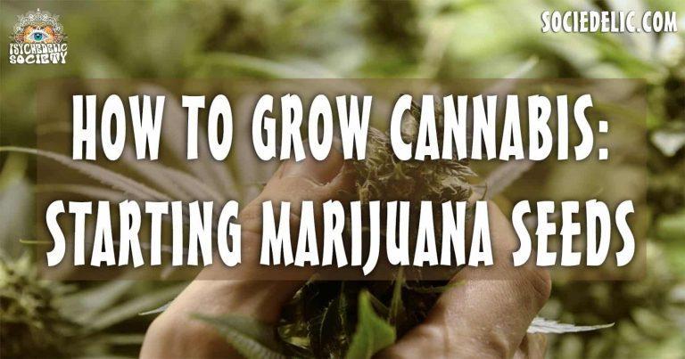 How To Grow Cannabis: Starting Marijuana Seeds