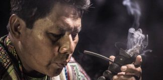 International Research into Ayahuasca - Under The Microscope