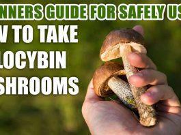 How to Take Psilocybin Mushrooms