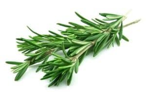 rosemary kill cancer