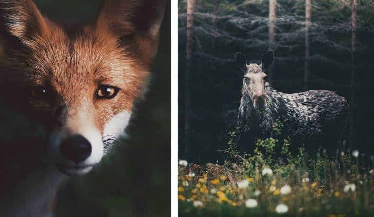Photographer Captures The Soul Of The Forest With Stunning Animal Portraits