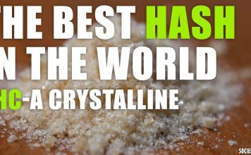 The Best Hash in the World - THC-A CRYSTALLINE