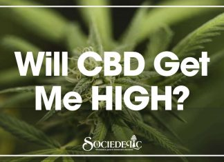 Will CBD Get Me High