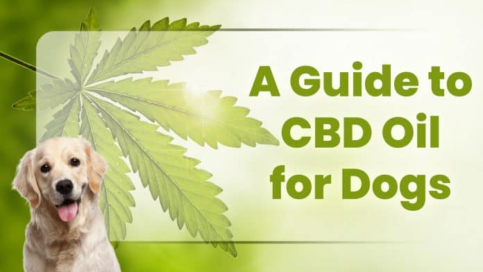 A Guide to CBD Oil for Dogs