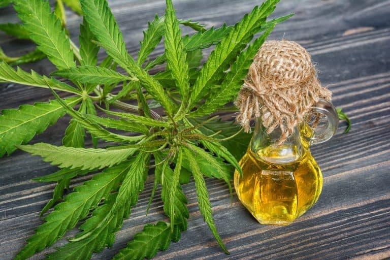 10 Little Known Facts About CBD Oil