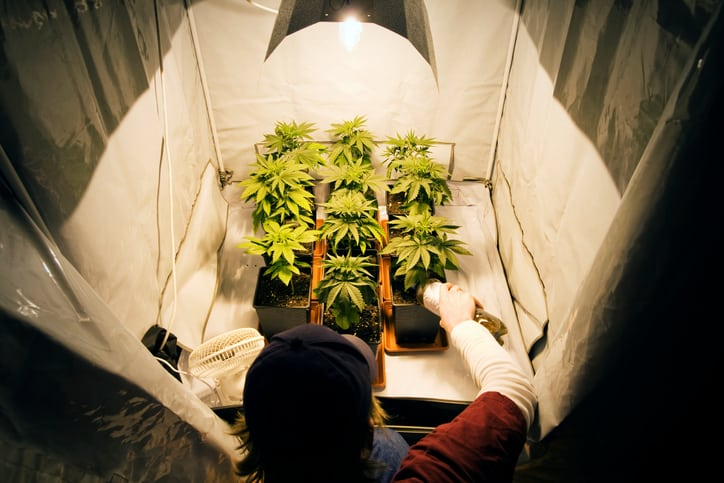 What you need to Grow Cannabis Indoors
