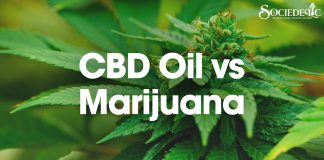 CBD Oil vs Marijuana
