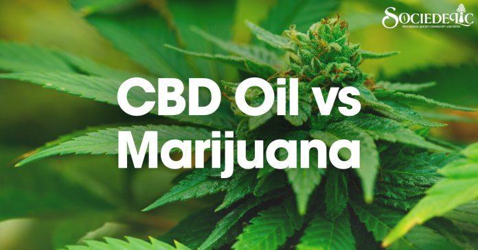 CBD Oil vs Marijuana