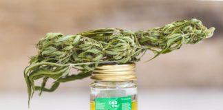 cbd oil and a cannabis bud