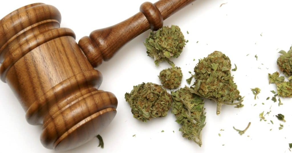 Cannabis buds and a Gavel