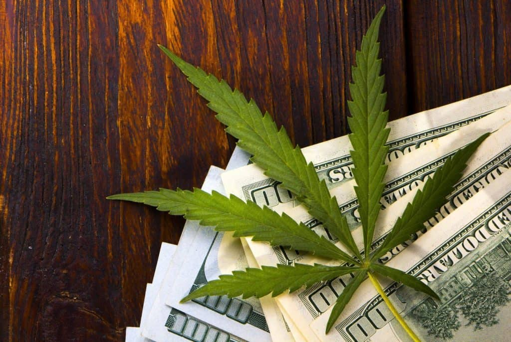 What Do You Need to Start a Cannabis Business? – Sociedelic