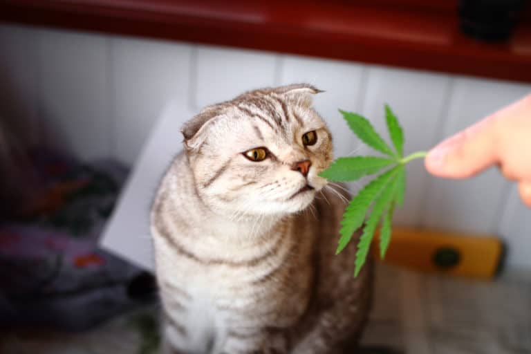 CBD Oil Provides Relief to Ailing Pets