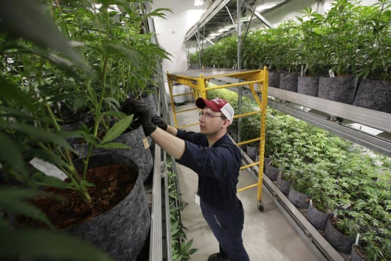 How Does the Legal Marijuana Industry Operate?