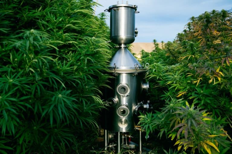 What Are the Different Types of Cannabis Oil Extraction