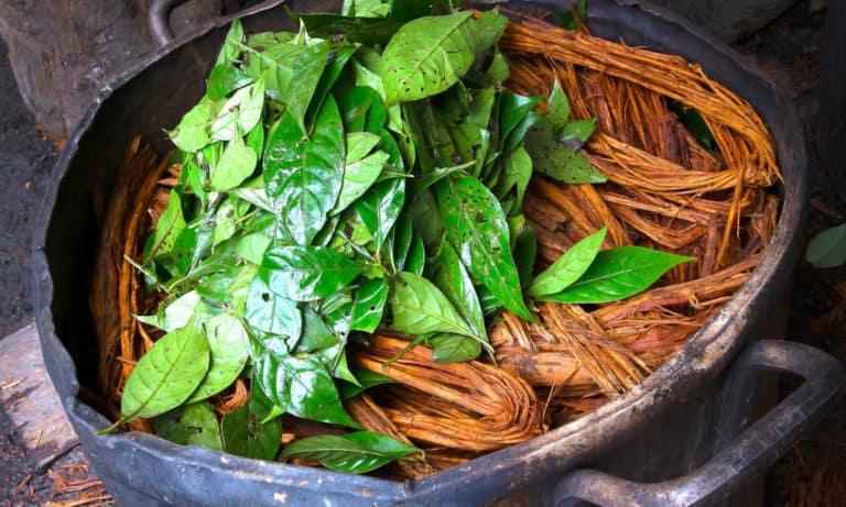 Top 10 Amazonian Medicines that make us more Healthy, Happy & Free