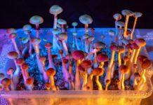 magic mushrooms growkit