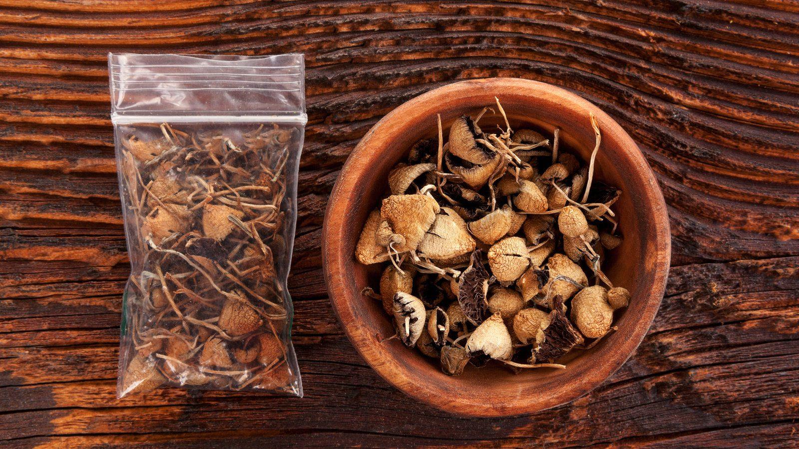 Psilocybin Mushrooms Effects and Dosage