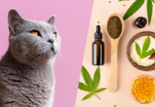 4 Tips for Relieving Your Cat's Anxiety